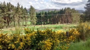 View from the side of the road, driving to one of my lessons - Scottish Highlands in the sun, with gorse and broom in full bloom